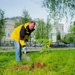 Генеральный директор ОАО «Жилищник» Игорь Меншутин  принимает активное участие в озеленении города
